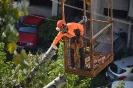 Budapest Nyárfa kivágás daruval